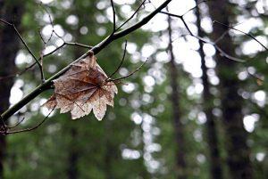 late autumn leaf