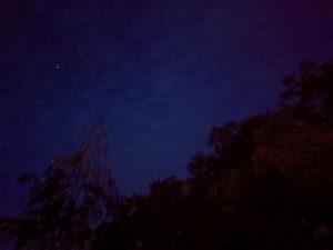 starry oaks
