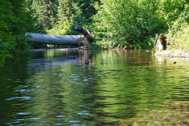 Picnic on Pistol Creek